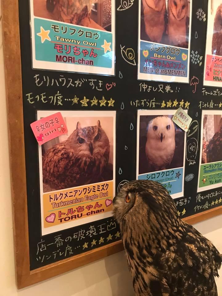 Cafe HOOTHOOT(渋谷)
